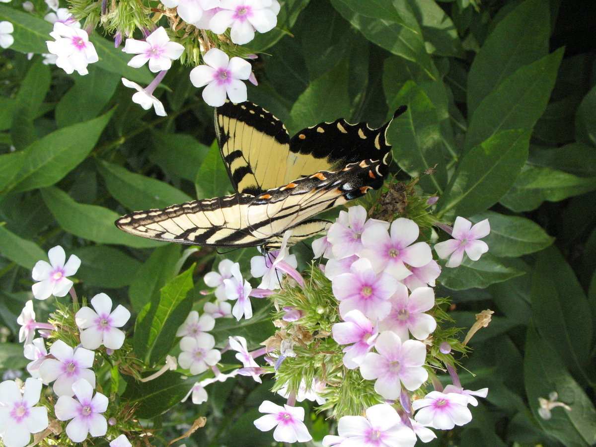 Image Result For Fort Worth Botanic Garden
